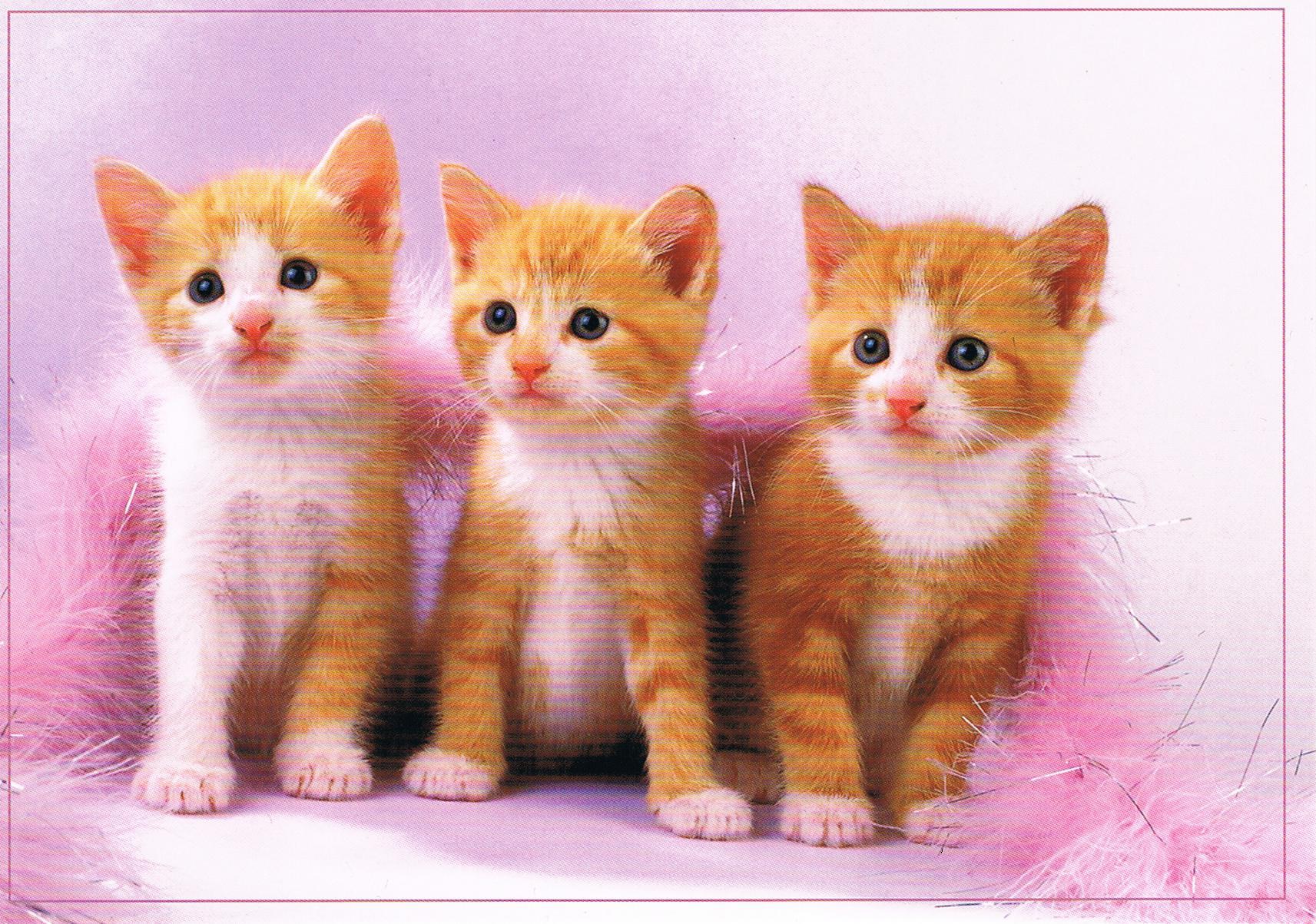 Katzen aus Tschechien