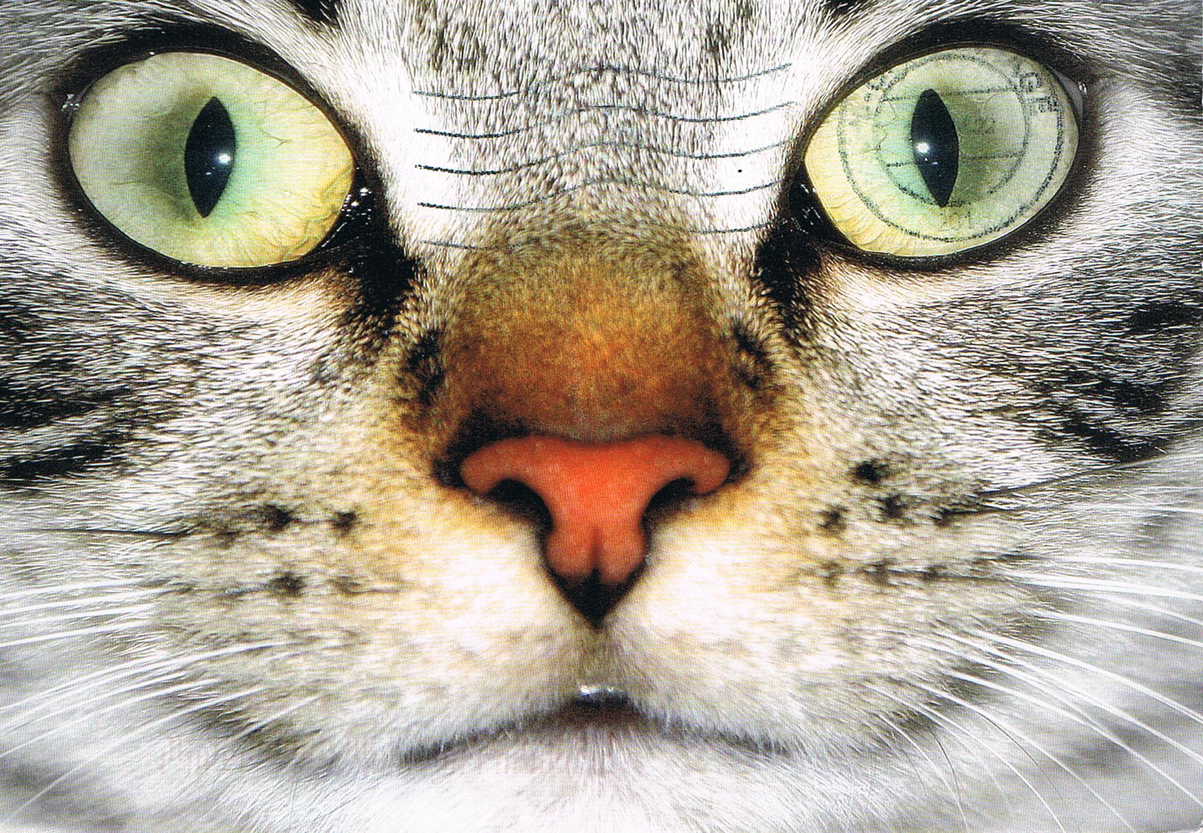 Eine Katze aus den Niederlanden