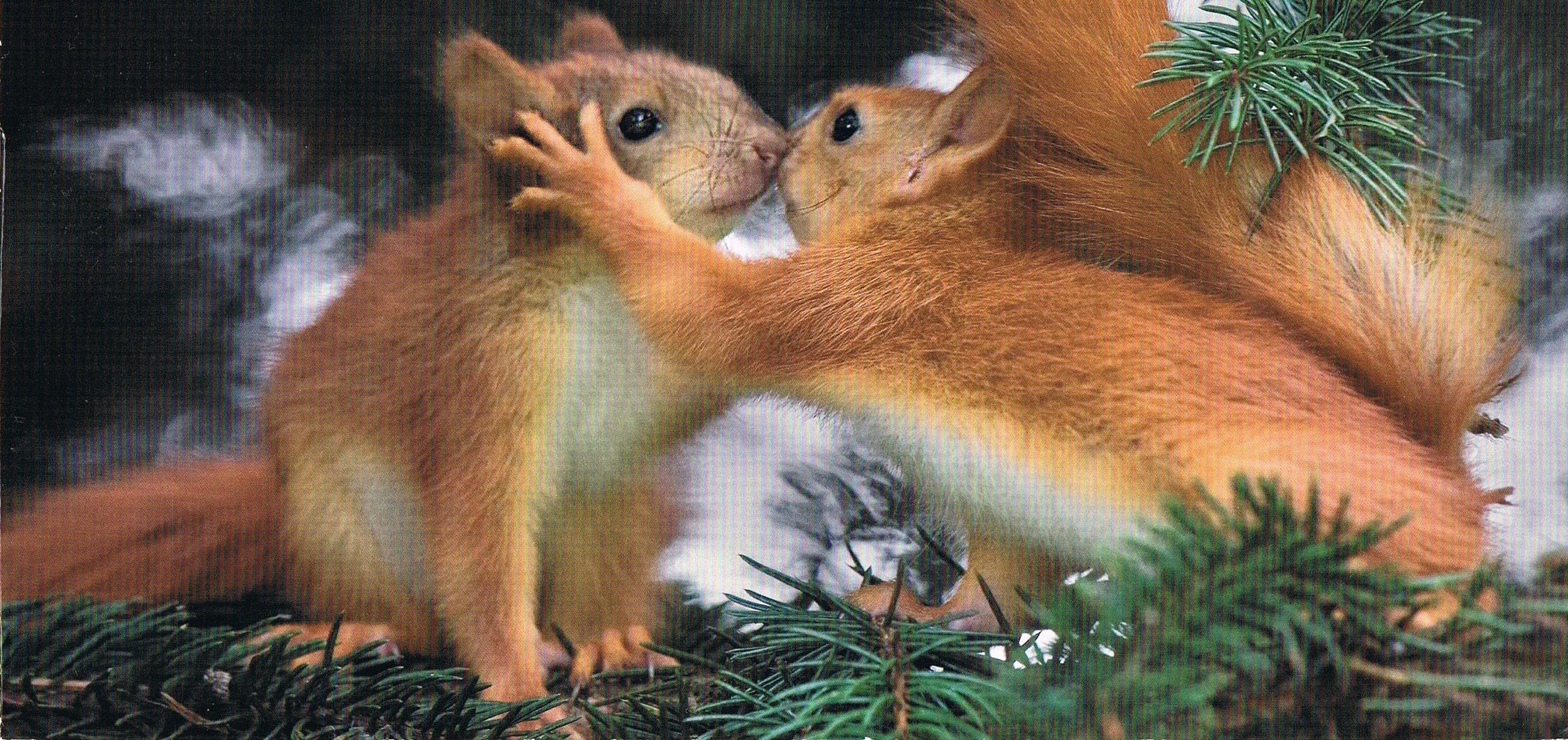 Eichhörnchen aus Österreich