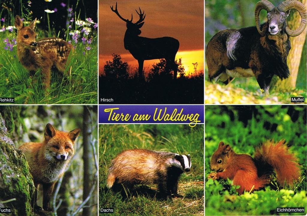 Tiere am Waldweg