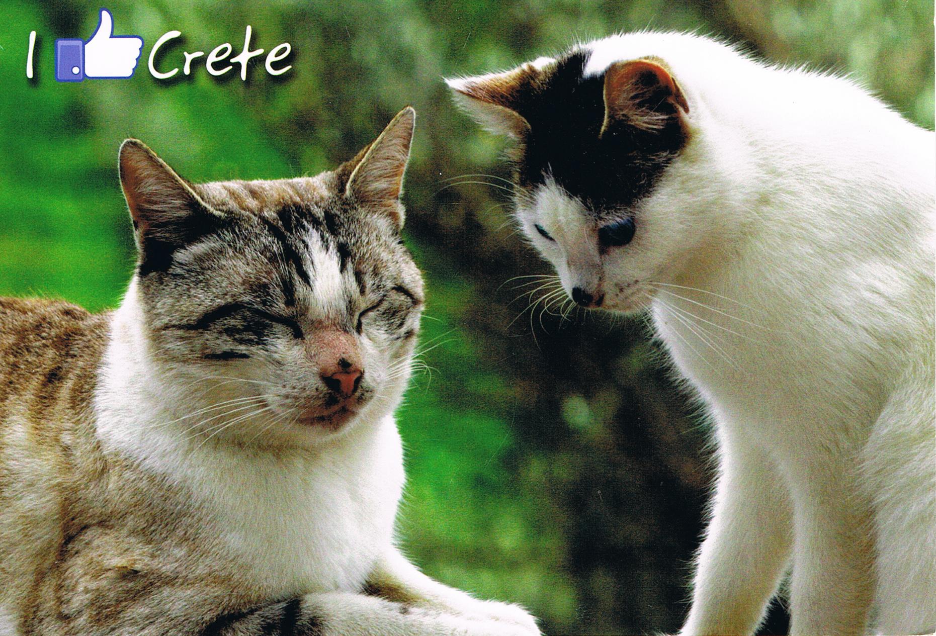 """I like Crete"" aus Russland"