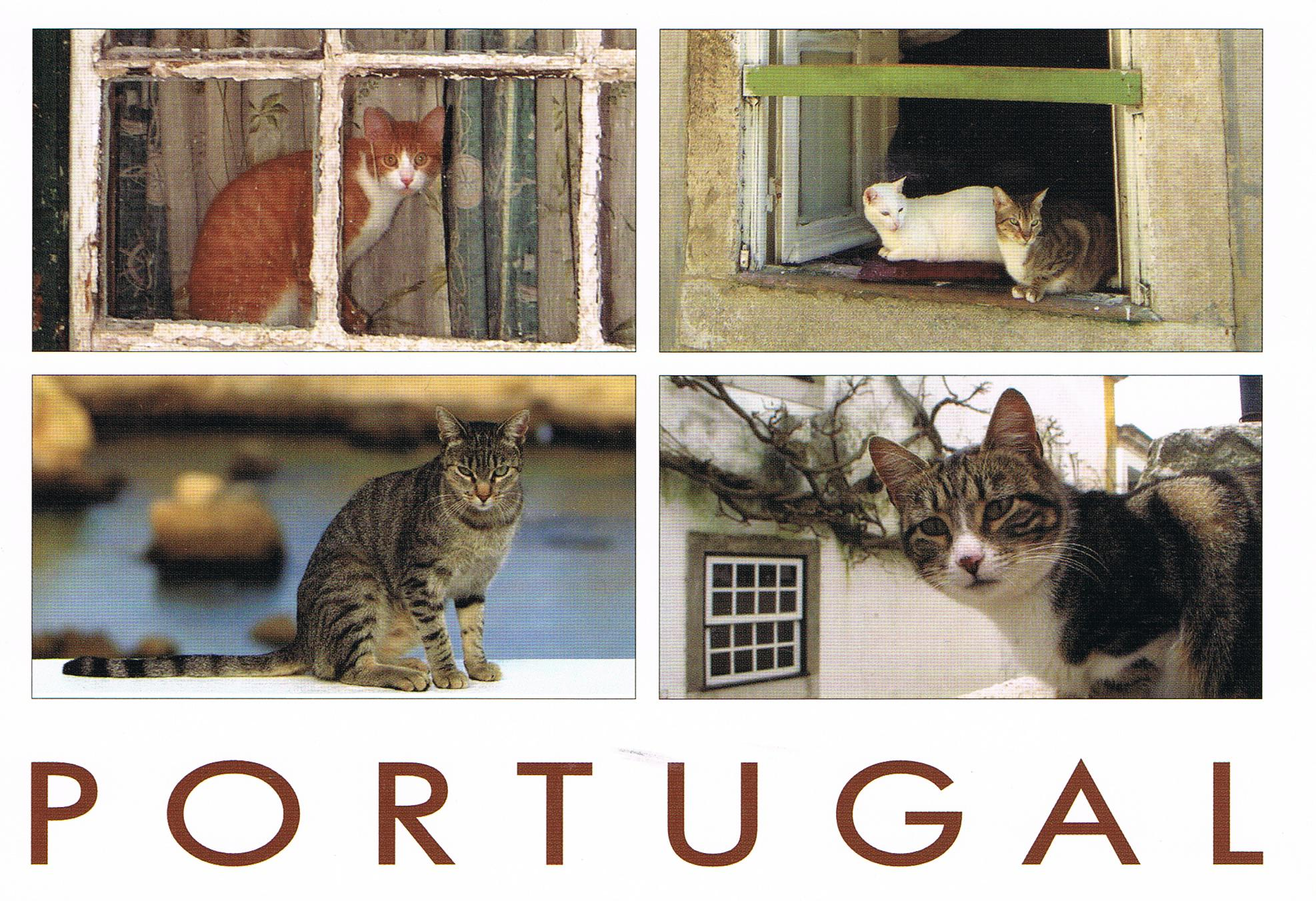 Katzen in Portugal