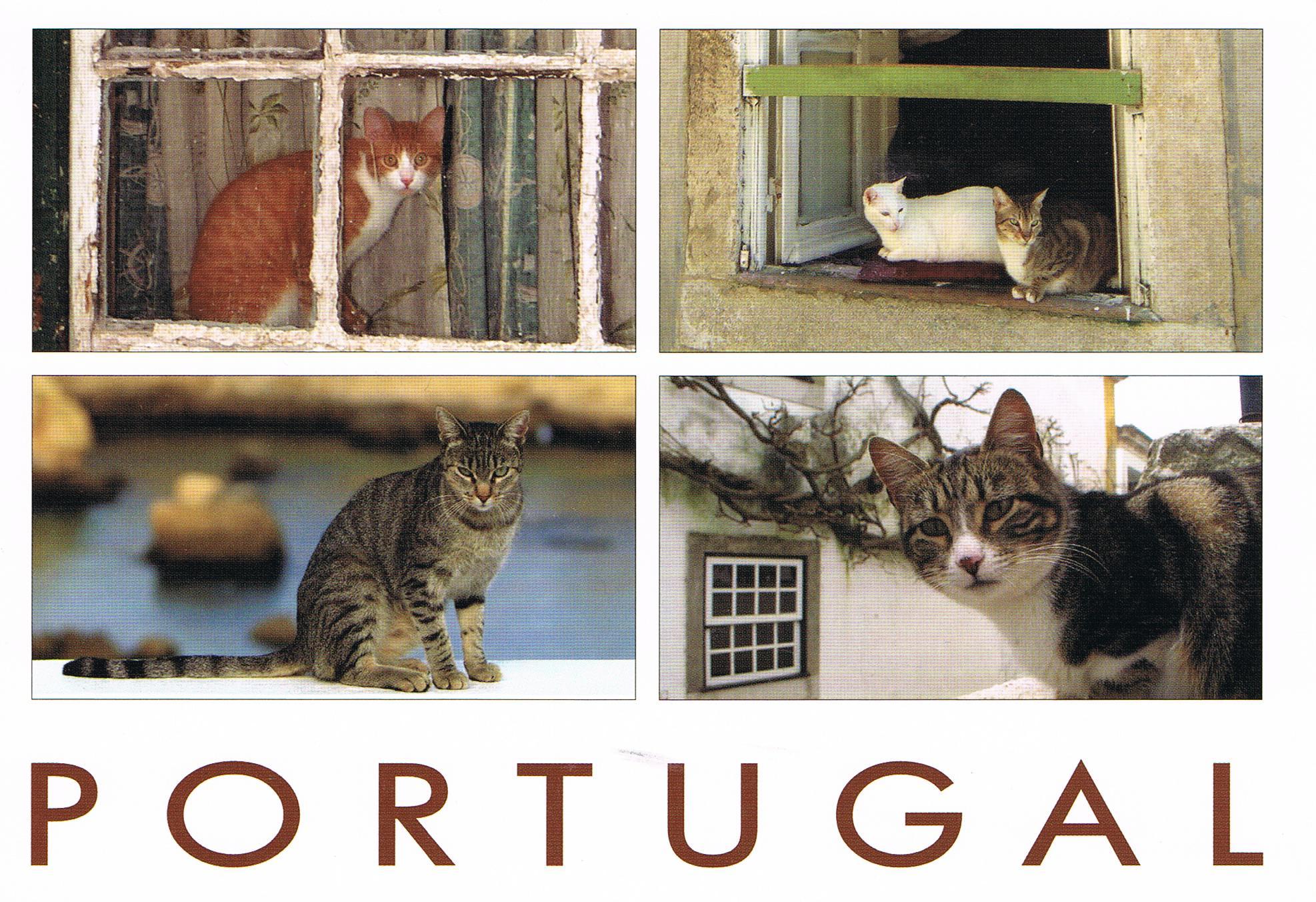 Katzen in Portugal