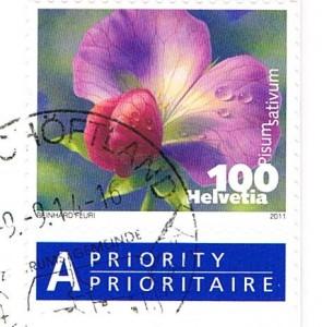 Blüte der Erbse (Pisum sativum)