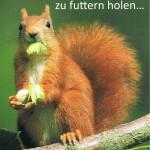 Eichhörnchen aus Gudesberg
