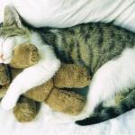 Katze mit Teddy