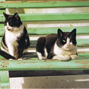 Katzen aus Wolfenbüttel
