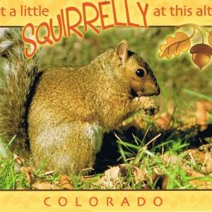 Grauhörnchen in Colorado