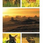 Tiere in der Veluwe