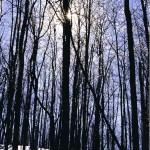 Winterlandschaft in Minnesota