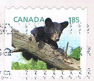 Junger Bär auf einer Marke aus Kanada