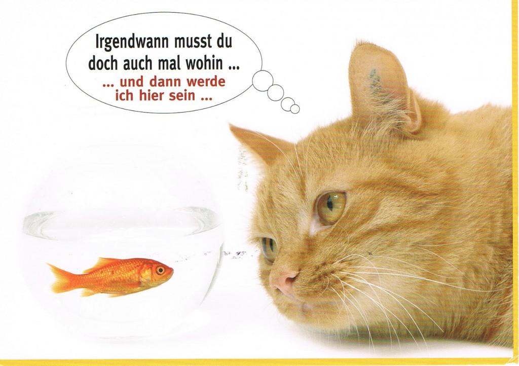 Lauernde Katze aus Aachen