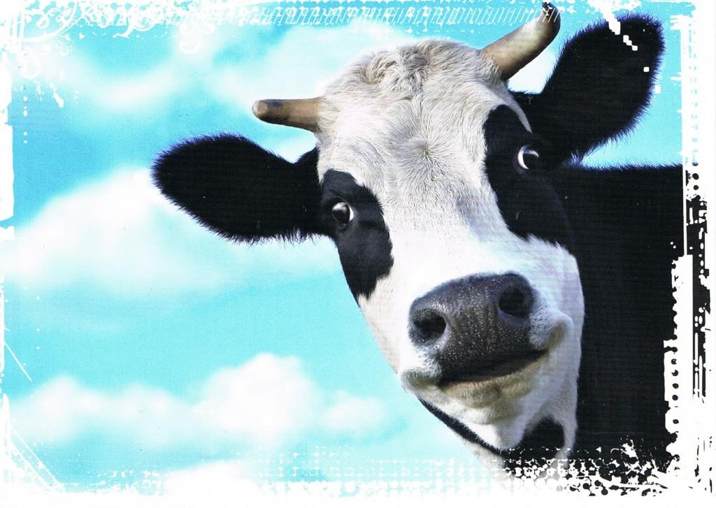 Schwarzbunte Kuh aus den Niederlanden
