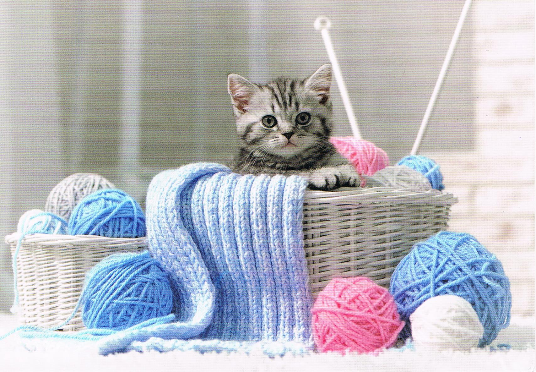 Ein Kätzchen aus Russland