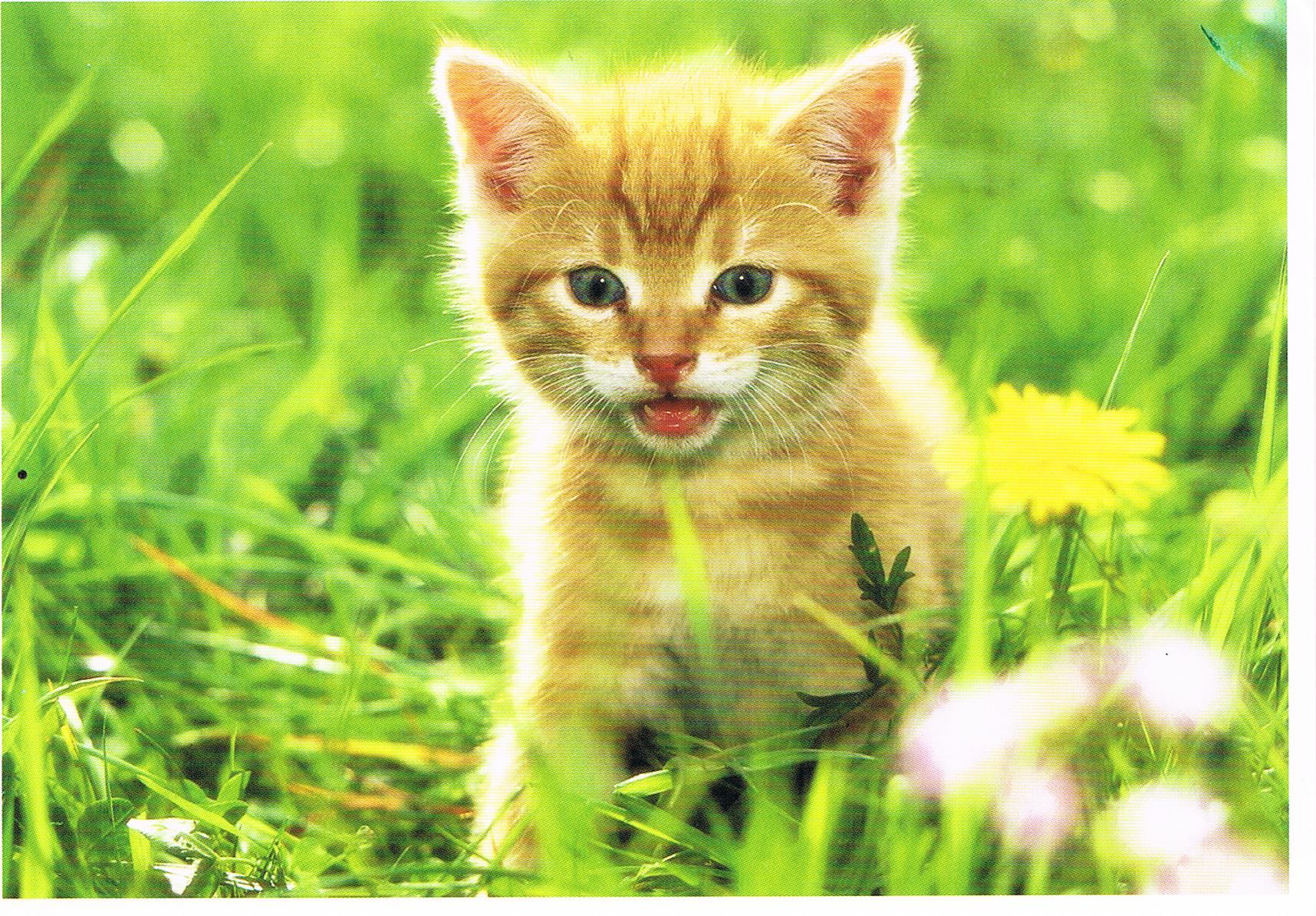 Ein Kätzchen aus Göllheim
