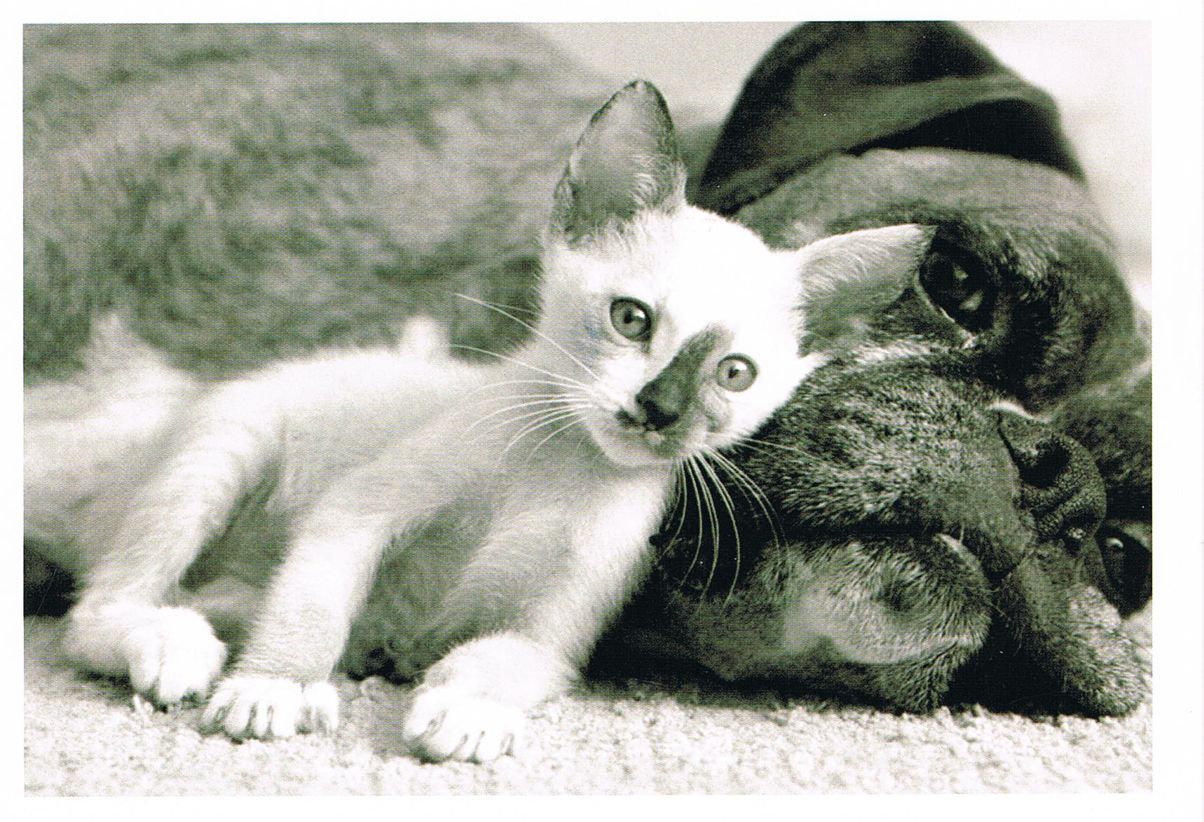 Hund & Katze aus Finnland