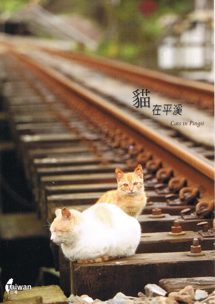 Cats in Pingsi