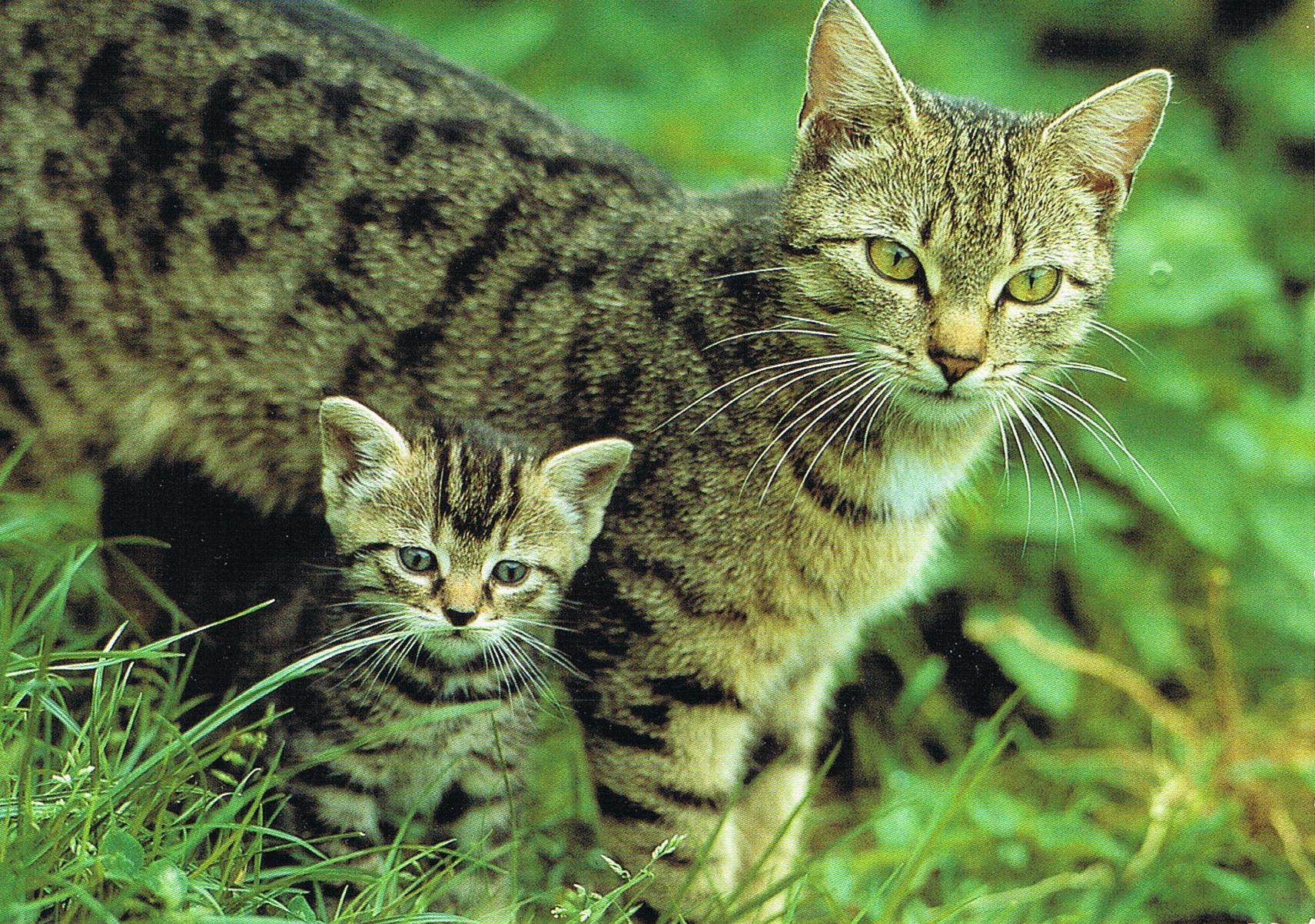 Katzen aus Aschaffenburg